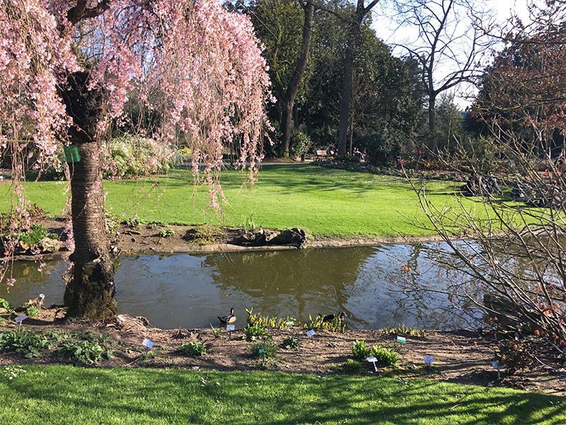 Balade au jardin des plantes à Nantes