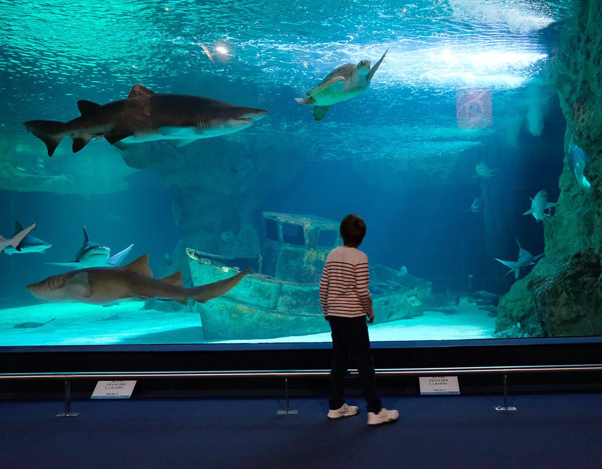 Visite de l'Océarium du Croisic