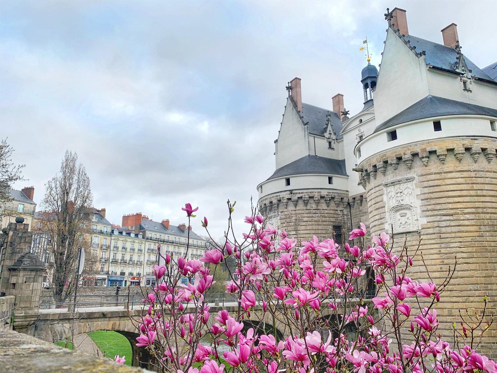Les arbres en fleur devant le Château des Ducs de Bretagne au printemps à Nantes
